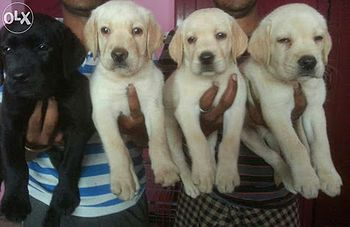 Dogs of my friend.jpg