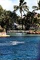 Dolphin Cove 41.jpg