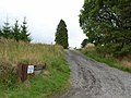 Driveway to Ladyhill, Wark Forest - geograph.org.uk - 244719.jpg
