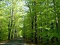 Droga do Żar wiosną - panoramio - StachBpl.jpg