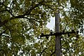 Drvenste vrste biljaka, Niška tvrđava, Niš, Srbija (221).jpg