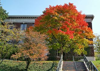 State University of New York College of Environmental Science and Forestry - Autumn colors, Bray Hall