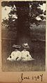 Edwardian ladies in wonderful large hats under the old oak tree, June 1907 (6613979101).jpg