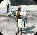 Egypt Arabian Horse and Sais, Cairo.jpg