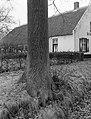 Eik bij boerderij Bakewell bij Weert, Bestanddeelnr 192-0267.jpg