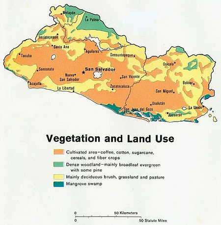 Geography India - Natural Vegetation