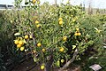 Eleouthkia Traditional and Botanical Park, Cyprus - panoramio (6).jpg