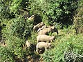 Elephantvalley-elephants.jpg