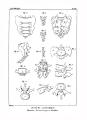 Encyclopédie méthodique - Systeme Anatomique, Pl12.png