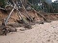 Erosion, Hedderwick Sands - geograph.org.uk - 725617.jpg