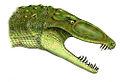 Erpetosuchus.jpg