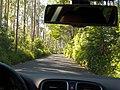 Eucalyptus forest on ER209, Madeira, Portugal, 26 June 2011 - panoramio.jpg