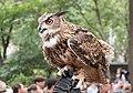 Eurasian eagle-owl (44059).jpg