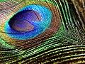 Eye 2 (116090669).jpeg