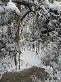 FL Swamp in Snow (5303620831).jpg