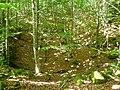 Fageda d'Aralar entre el Maldorzuri i els rasos d'Albia P1270580.jpg