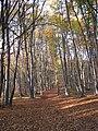 Faget forest (3043477446).jpg