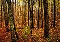 Fall, French Rapids, Brainerd (33590520506).jpg