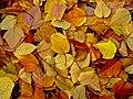 Fall Leaves (199582361).jpeg