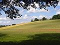 Farmland, Cookham - geograph.org.uk - 855559.jpg
