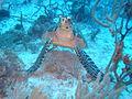 Fathom Turtle.JPG