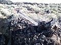 Fence post stuck in lava rock - panoramio.jpg