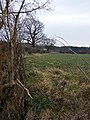 Field, hedge and trees, Audleby Low - geograph.org.uk - 1115488.jpg