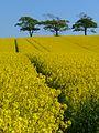 Fields at Birkby (Crosscanonby), Cumberland - geograph-4329005.jpg