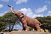 Figura de Elefante.jpg