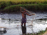 Most Keralites, such as this fisherman, live in rural areas.