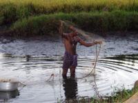 Fischer backwaters