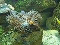 Fish (117526093).jpg