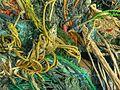 Fishnet (2049753587).jpg