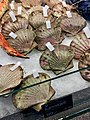 Fiskebryggen, Mathallen, Fishmarket, Bergen, Norway 2018-03-16. Pectinidae (scallop, kamskjell), etc. displayed for sale at Fjellskål sea food store.jpg