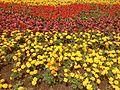 Flores Nova Petrópolis.jpg