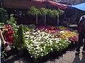 Flores y plantas Mercado Madre Selva.jpg