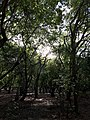 Floresta1.jpg