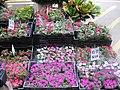 Flower Market Road IMG 5509.JPG