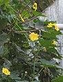 Flower Piirkku.jpg