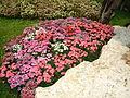 Flower garden found in Tak Thailand 2.jpg