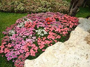 Flower garden found in Tak, Thailand. I don't ...