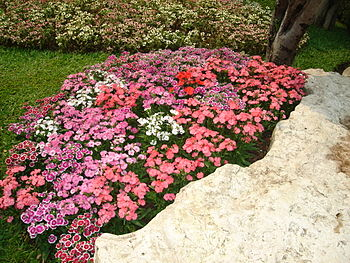 Flower garden found in Tak, Thailand. I don't ...