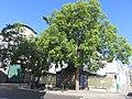 Fontanário do Torreão, Funchal - IMG 3405.jpg