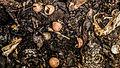 Food-scraps-compost.jpg