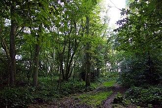 Aston Rowant Woods - Footpath in Aston Wood