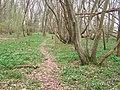 Footpath in Parsons Wood - geograph.org.uk - 1220553.jpg