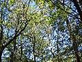 Forêt de la Coubre 005.jpg