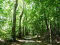 Forêt de la Robertsau-Piste cavalière (2).JPG