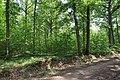 Forêt domaniale de Bois-d'Arcy 25.jpg