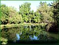 Ford Park, Upper Pond Reflections (2), Redlands, CA 7-12 (7699755112).jpg